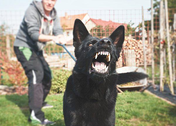dog bite claim